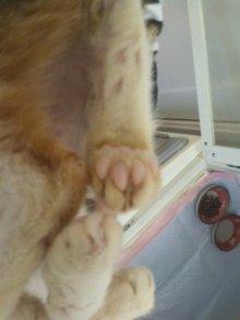猫にSweets-101106_1117~02.jpg