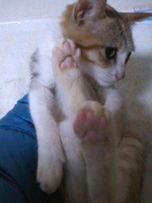 猫にSweets-101123_2328~01.jpg