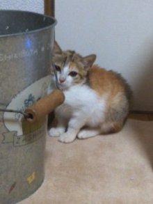 猫にSweets-101126_2254~01.jpg