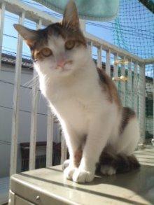 猫にSweets-101127_1119~02.jpg