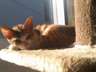 猫にSweets-101203_0927~01.jpg