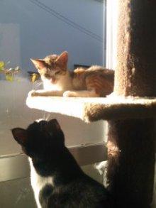 猫にSweets-101203_0926~01.jpg