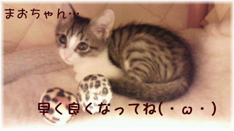 猫にSweets-まおちゃん