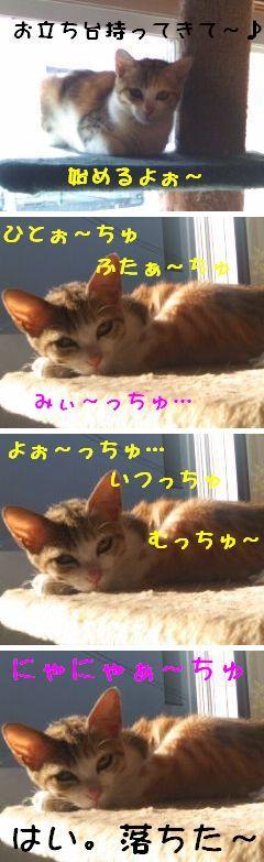 猫にSweets-こ医も龍3