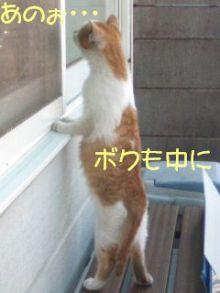 猫にSweets-子猫なんです