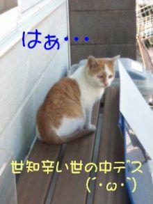 猫にSweets-子猫だと思ふ