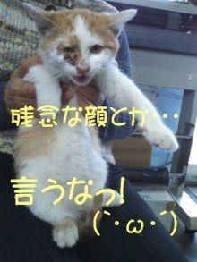 猫にSweets-残念顔・・・