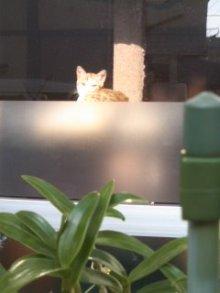 猫にSweets-こいも
