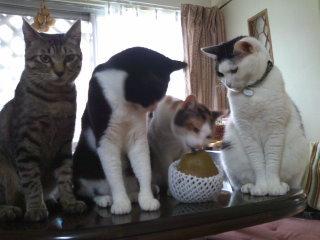 猫にSweets-ブリハトヨコワウシコ