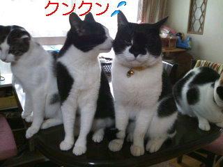 猫にSweets-はとやんとジージョ