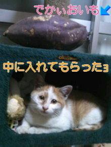 猫にSweets-ぶちゃお