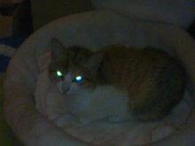 猫にSweets-101225_0006~01.jpg