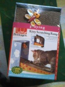 猫にSweets-101228_1011~01.jpg