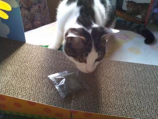 猫にSweets-101228_1016~01.jpg