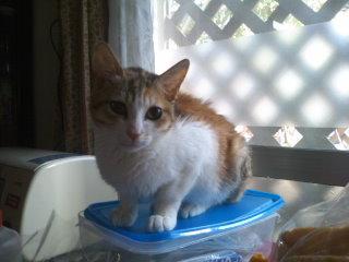猫にSweets-101228_1032~01.jpg