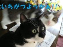 猫にSweets