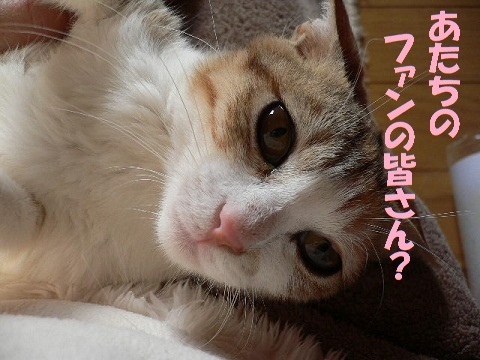 猫にSweets-koimo