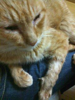 猫にSweets-110126_2015~01.jpg