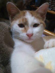 猫にSweets-110124_2121~01.jpg