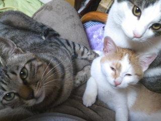 猫にSweets-110124_2119~01.jpg
