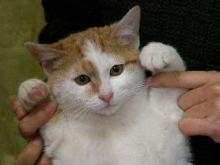 猫にSweets-DSCN5464_7422_s.jpg