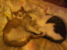 猫にSweets-ぶちゃおとかんぱち