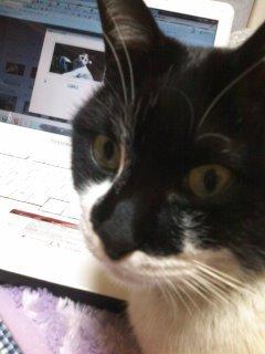 猫にSweets-110216_2011~01.jpg