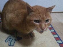 猫にSweets-101120_2314~01.jpg