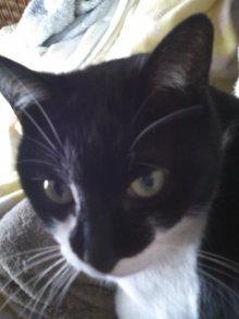 猫にSweets-110218_1104~01.jpg