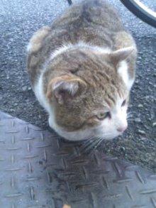 猫にSweets-110301_1708~02.jpg