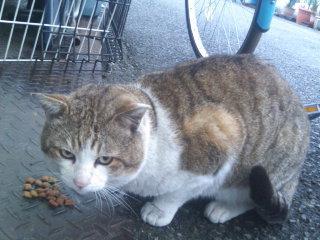猫にSweets-110301_1709~02.jpg