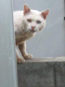 猫にSweets-100630_1409~02.jpg