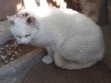 猫にSweets-110109_1203~02.jpg