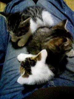 猫にSweets-110309_1721~001.jpg