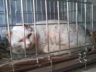 猫にSweets-110313_1435~01.jpg