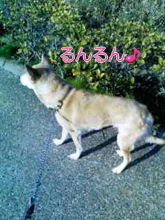 猫にSweets-110310_0808~001_0001.jpg