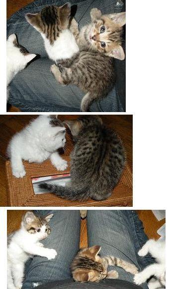 猫にSweets-まっちゃんちの子猫