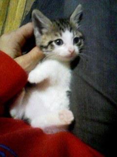猫にSweets-110315_0716~001.jpg