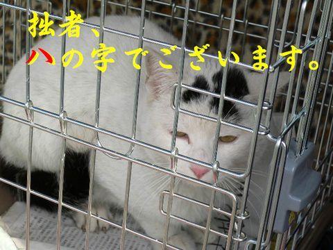 猫にSweets-はっちゃん