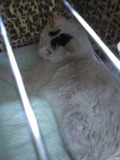 猫にSweets-110315_1700~01.jpg