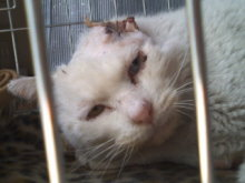 猫にSweets-110313_1415~02.jpg
