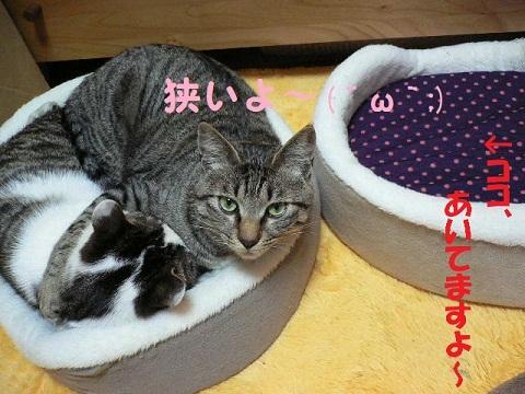 猫にSweets-ぶりかん