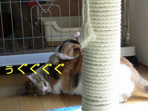猫にSweets-三毛づくし