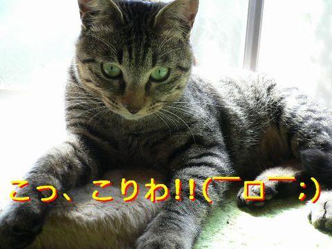 猫にSweets-ぶりっちゅ
