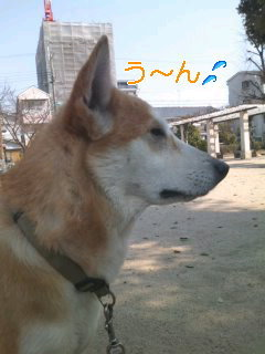 猫にSweets-110329_1345~02_0001.jpg