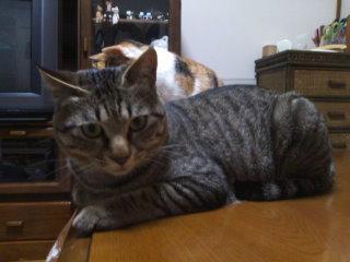 猫にSweets-110407_2316~01.jpg