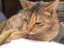猫にSweets-100122_1548~01.jpg