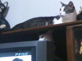 猫にSweets-110512_2216~01.jpg