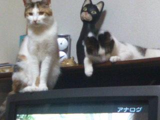 猫にSweets-110512_2215~01.jpg