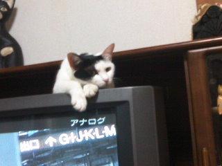 猫にSweets-110512_2243~01.jpg